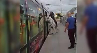 un-cheval-monte-dans-le-tram-de-montpellier_2558856_667x333
