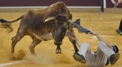 vaquillas-fiestas-del-pilar-zaragoza-plaza-toros