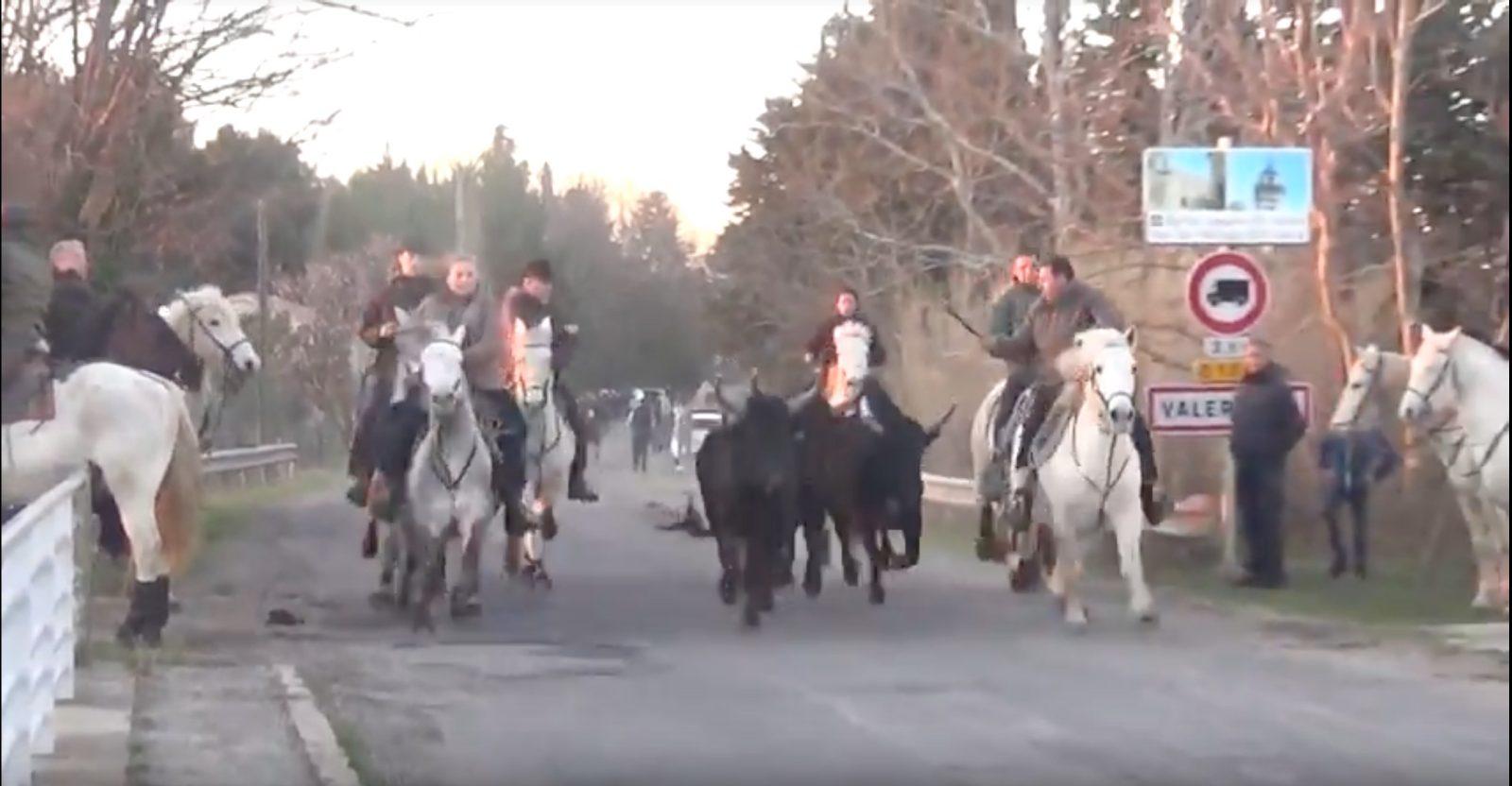 AGENDA – Manifestations taurines du 01 et 02 février 2020