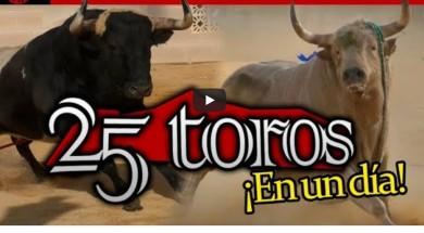 25 toros