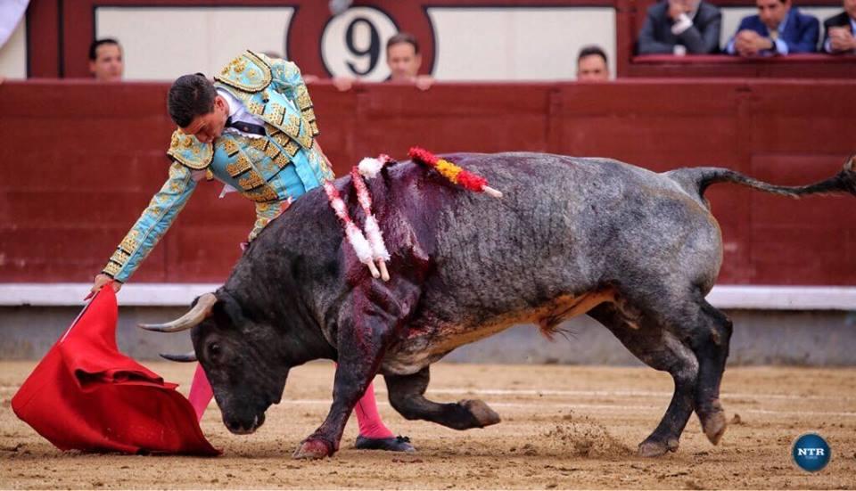 MADRID (04-06) Une oreille volée , une vuelta offerte et un grand torero de Madrid: OCTAVIO CHACON