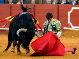 """Spanish matador 'El Juli' performs a pass with muleta on the bull """"Orgullito"""", that eventually was granted a pardon and spared, during a bullfight at the Maestranza bullring in Sevilla on April 16, 2018. / AFP PHOTO / CRISTINA QUICLER BULLFIGHTING-ESP-JULI"""