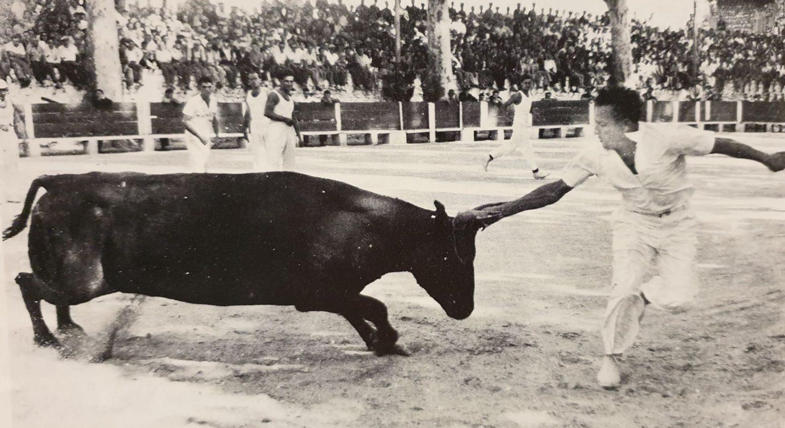 """IMAGE DE JADIS // Raset de FIDANI au taureau """"SANGAR"""" 1954"""