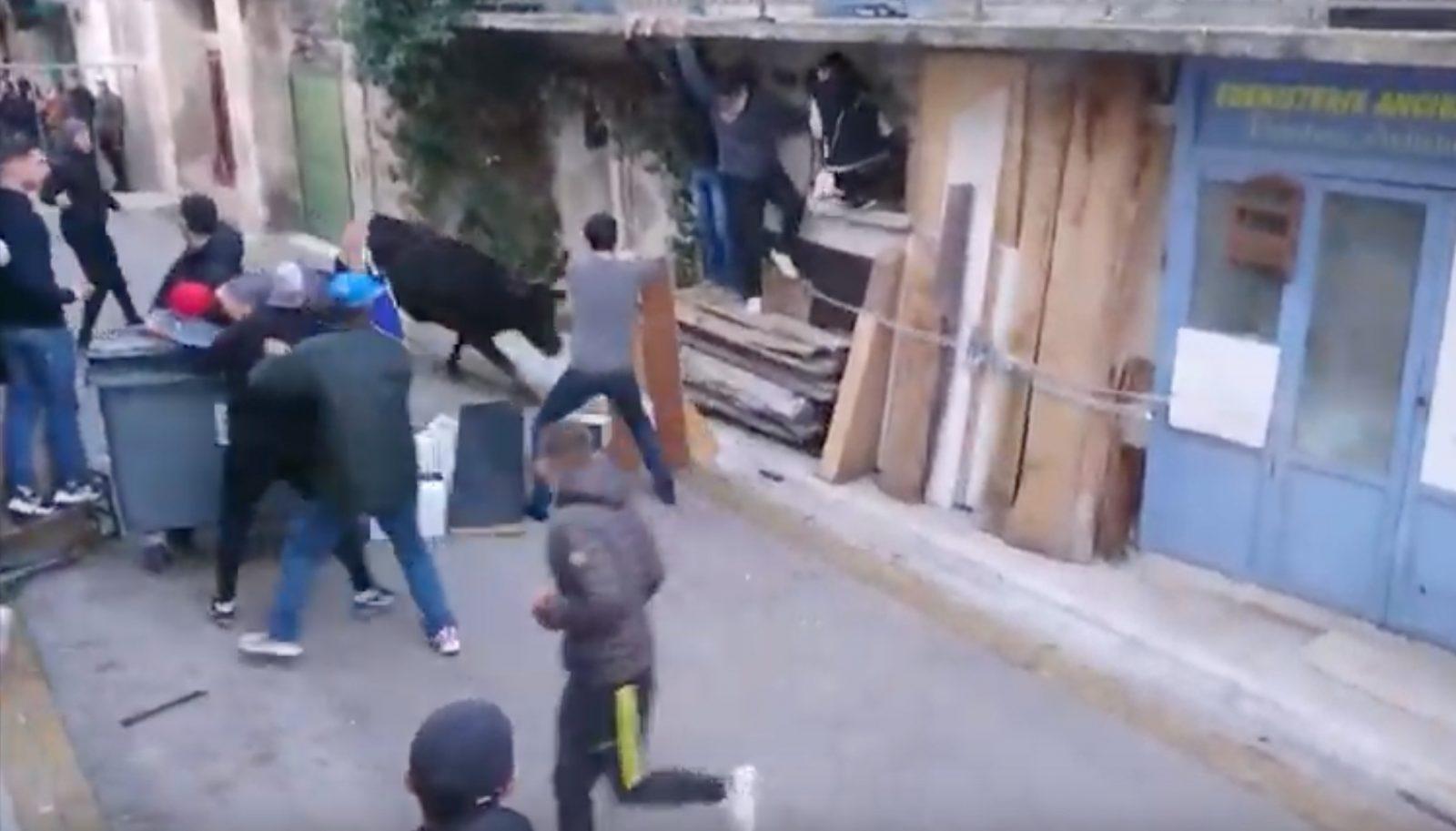 LUNEL VIEL (26/01/2019) – Retour en vidéo sur la journée taurine