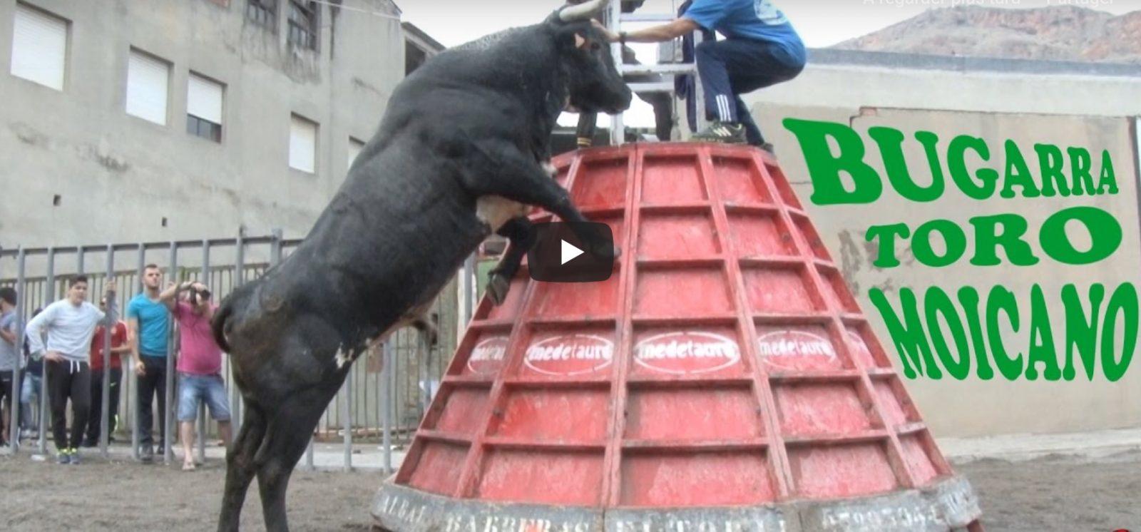 BUGARRA – Ganaderia El Cali FAMOSO Toro Moicano – VIDEO TOROS SAM VALENCIA