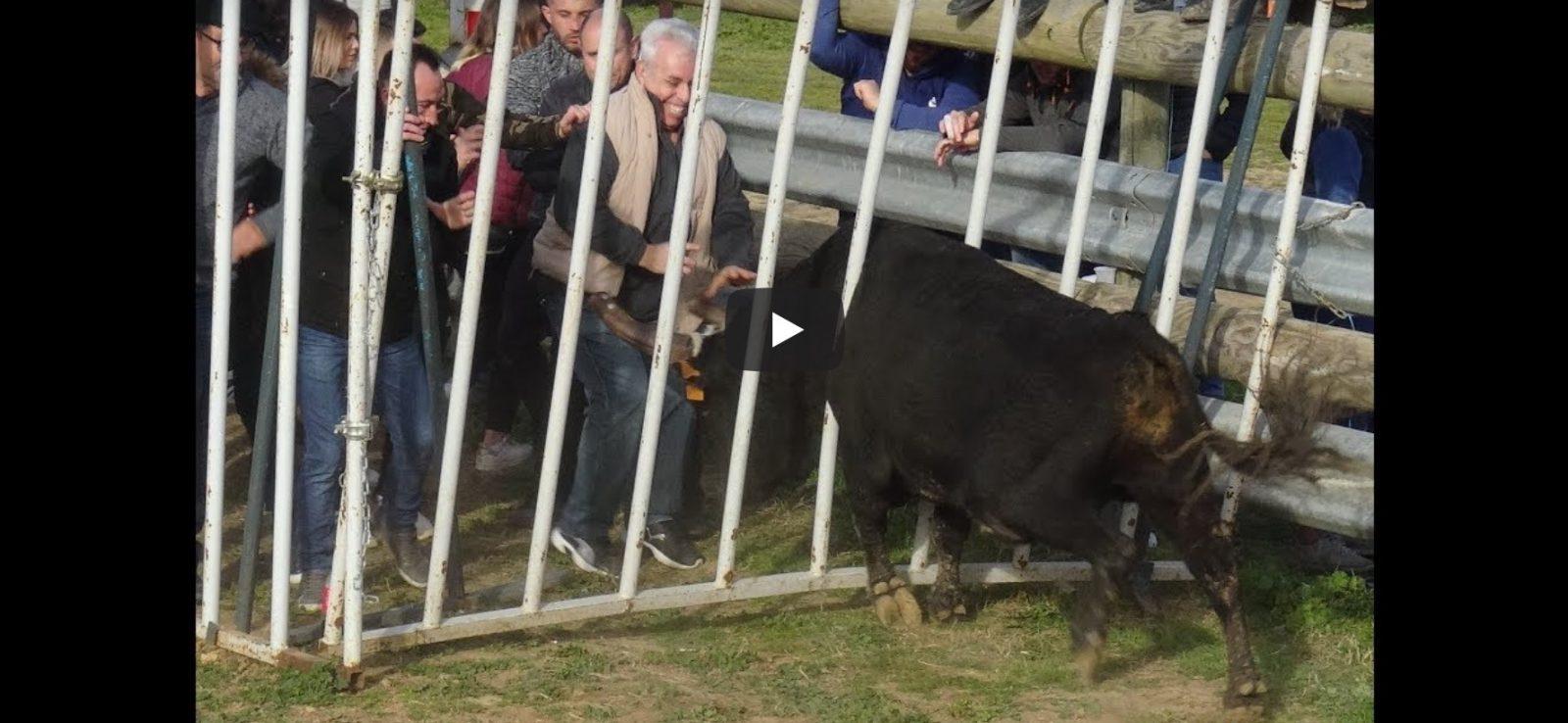 MANADE LOU PITCHOUN (09/02/2019) – Retour en vidéo sur la journée taurine à la manade Lou Pitchoun