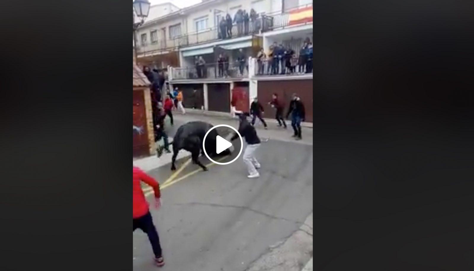 VIDEO // VALDEMORILLO (10/02/2019) – Un toro de Miura s'arrête sur le parcours de l'encierro, moment de panique…