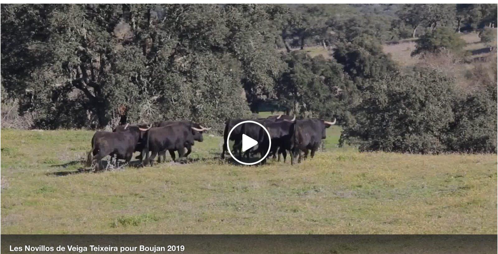 VIDEO //  Les novillos de la 5° édition de Toros Y Campo BOUJAN 2019
