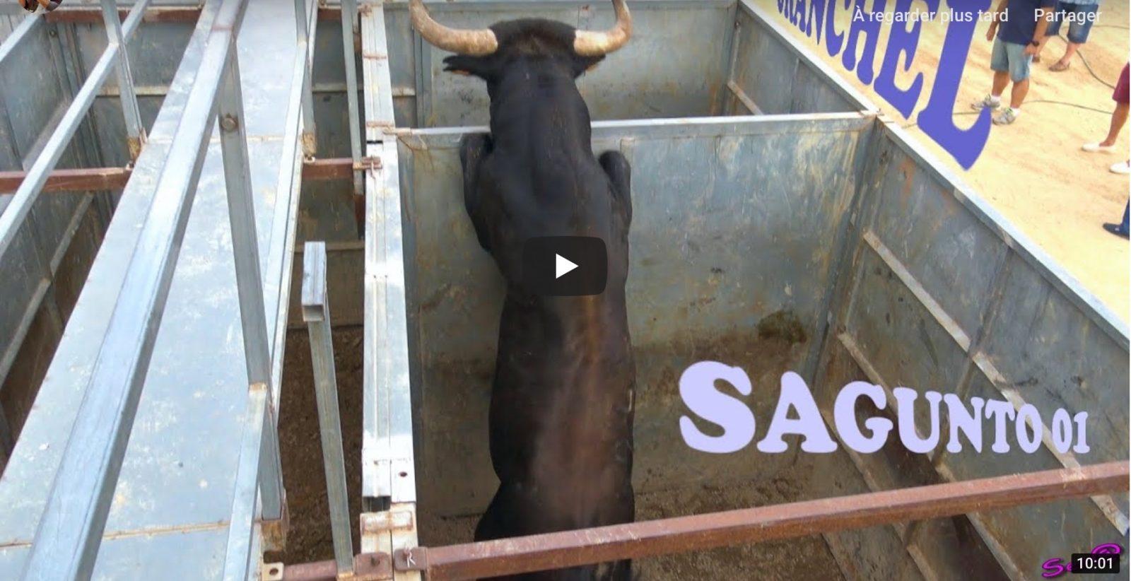 2018 SAGUNTO – TORO casi se sale de los Corrales
