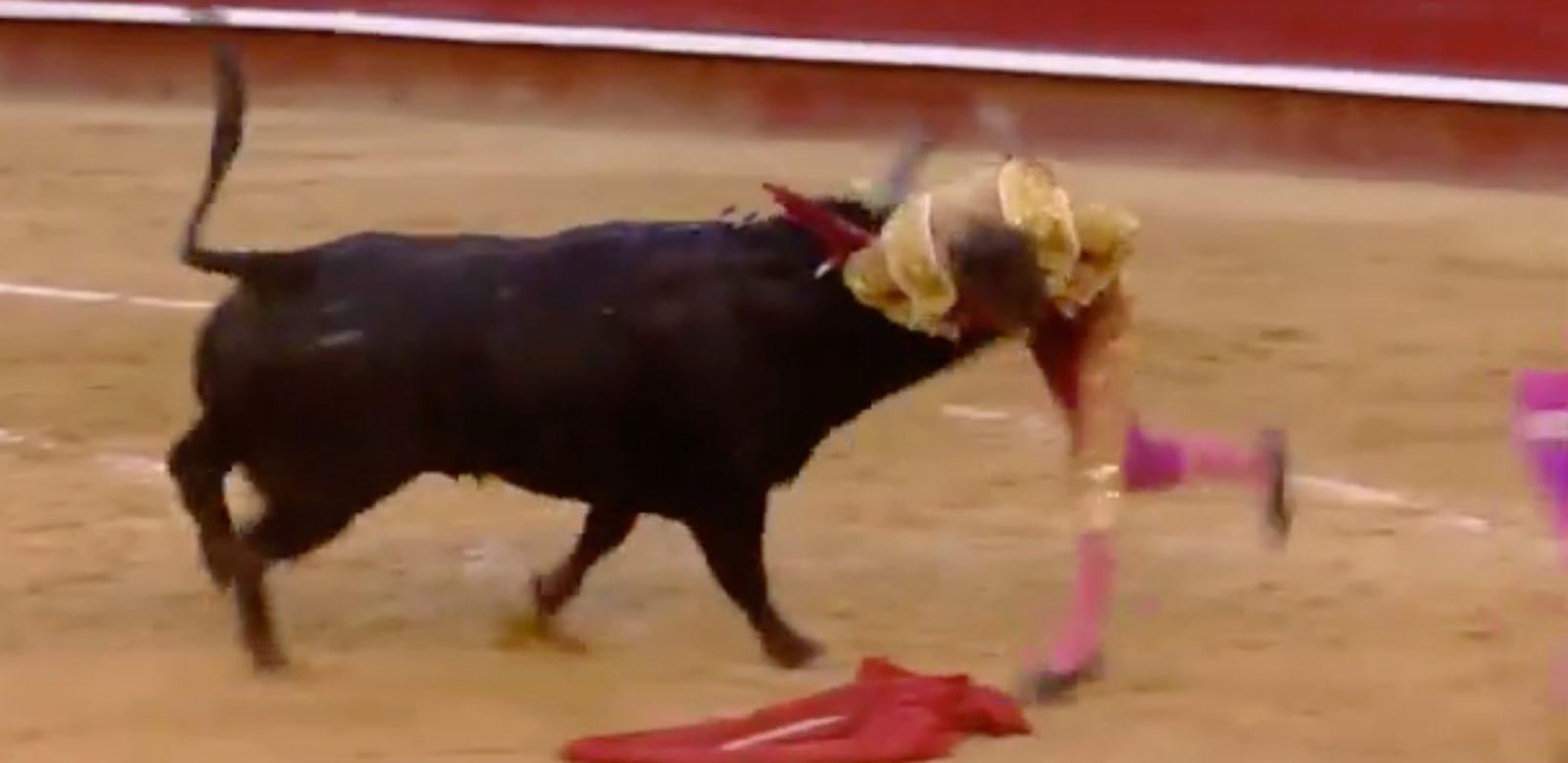VIDEO // Séquence impressionnante de la cogida de Borja Collado – Le résumé de la novillada