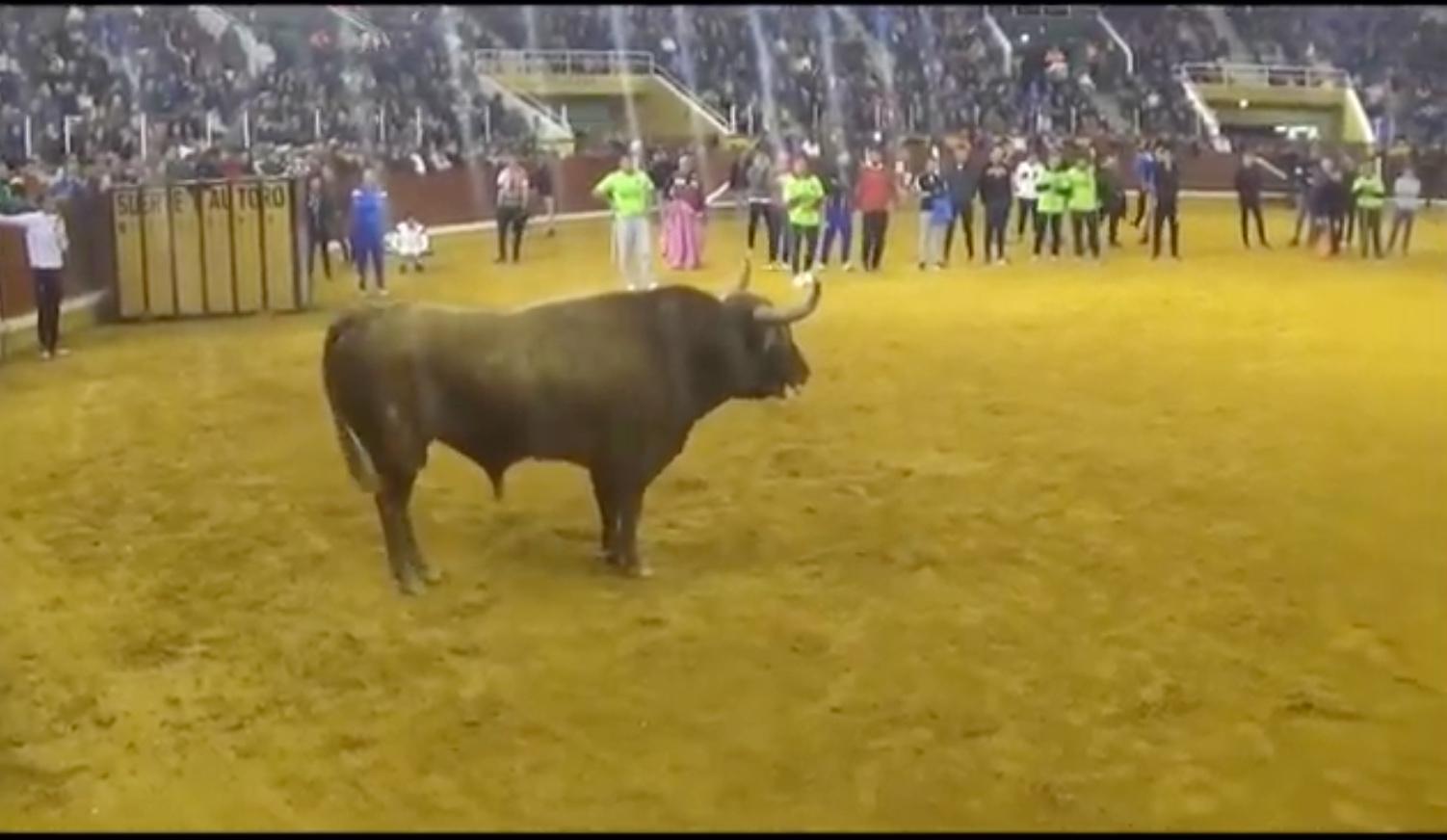 VIDEO // ILLESCAS 2019 – Toro del Milagro 2019