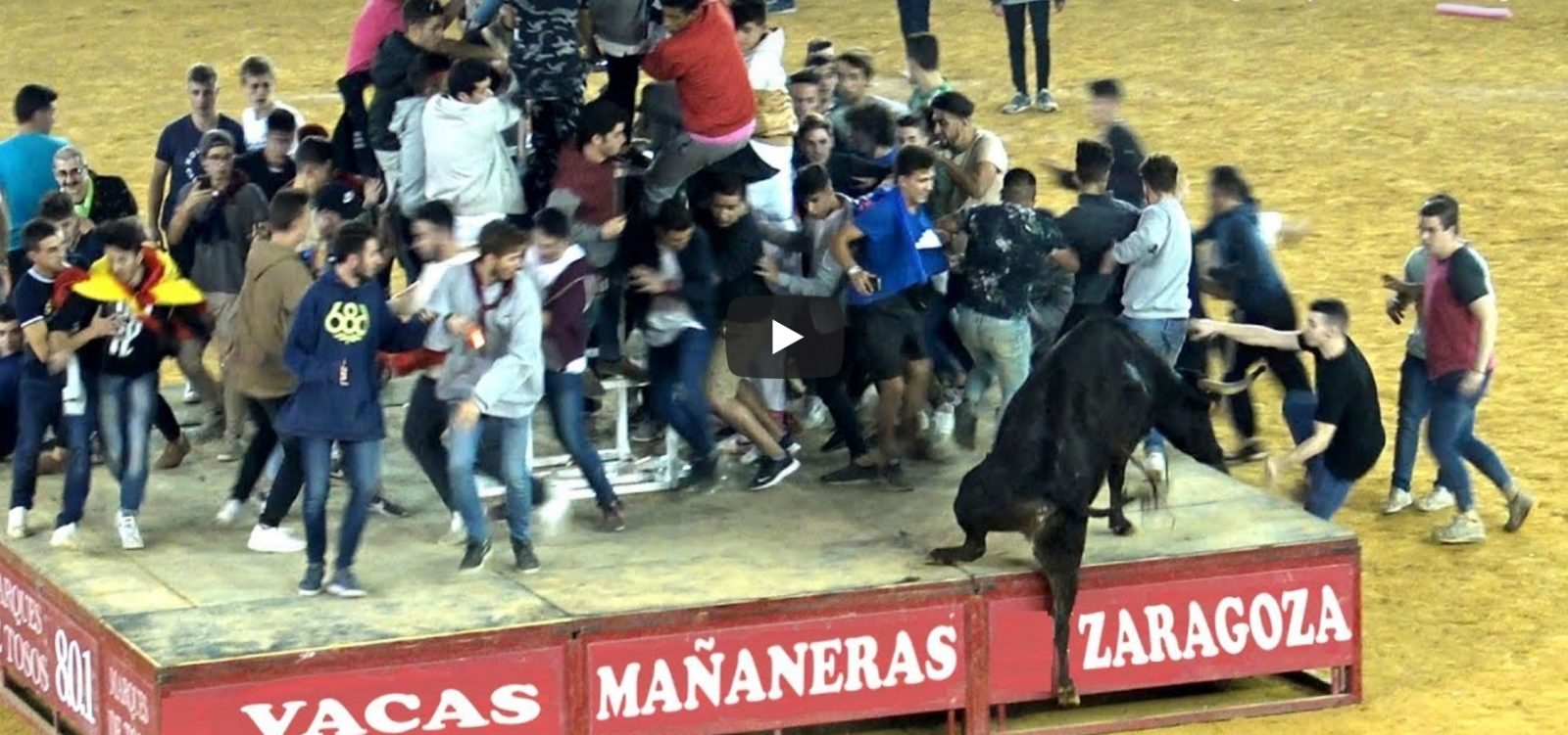 VIDEO // ZARAGOZA – Mañanas Vaquilleras (Video : TOROS SAM VALENCIA)