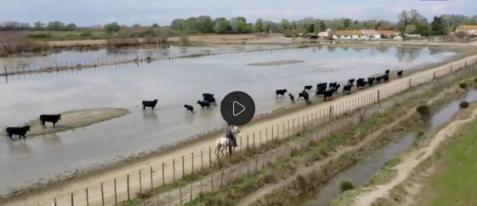 VIDEO TF1 // Les Saintes-Maries-de-la-Mer, un lieu de pèlerinage au cœur de la Camargue