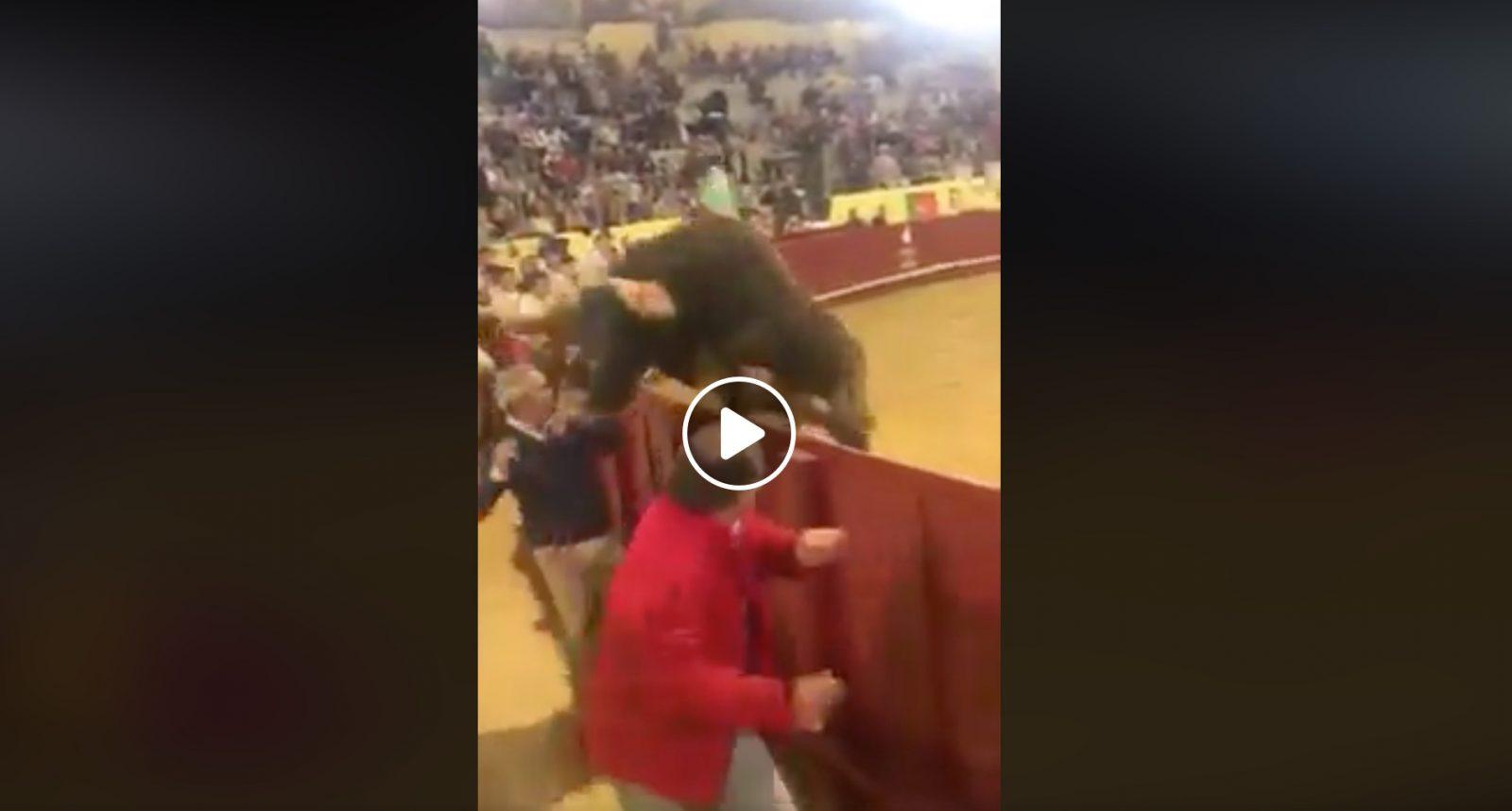 VIDEO DU NET // Un toro saute dans le callejon et surprend tout le monde