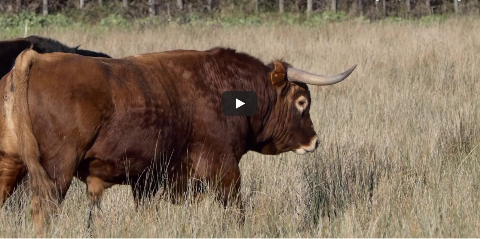 VIDEO // Les toros de Vic-Fezensac 2019