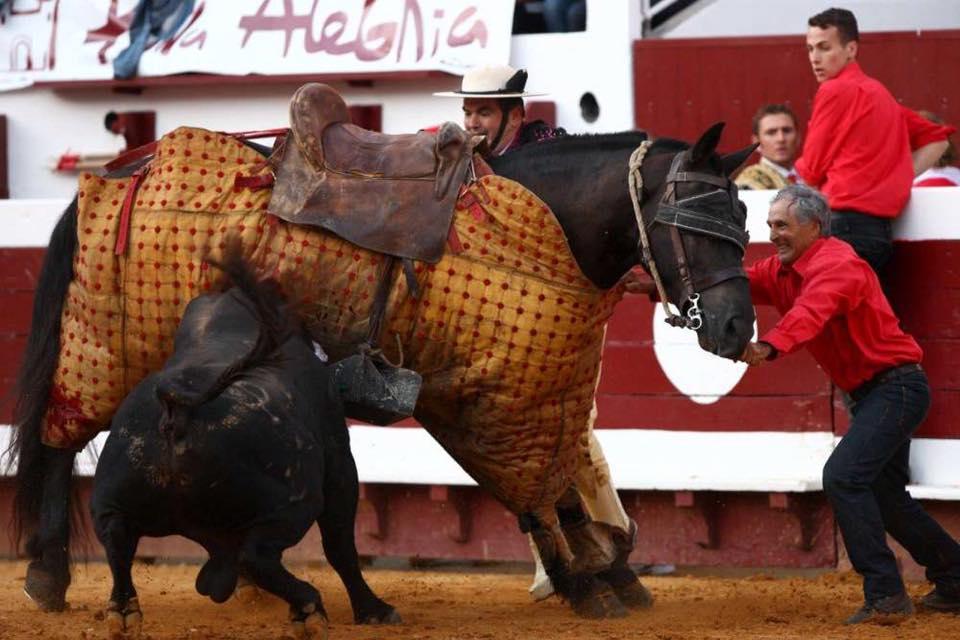 Les chevaux d'Alain Bonijol en quarantaine