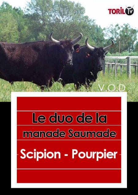 Scipion—Pourpier—video