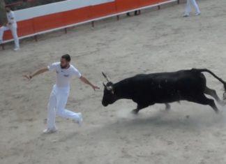 Course de taureaux de la manade du Rhône