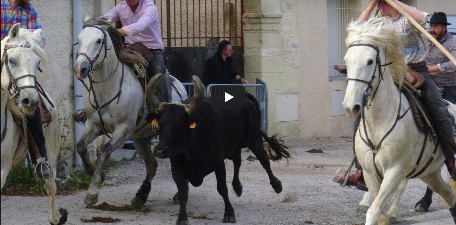 BUZIGNARGUES (18/05/2019) – Retour en vidéo sur l'abrivado bandido