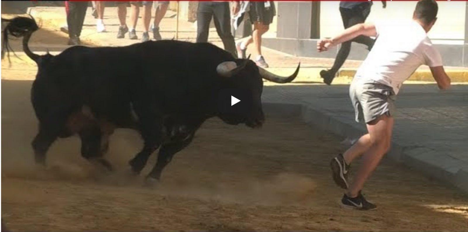 LA VALL D´UIXÓ – SAN QUERER 01/06/2016 Toro de MONTES DE OCA y vacas de FERNANDO MACHANCOSES
