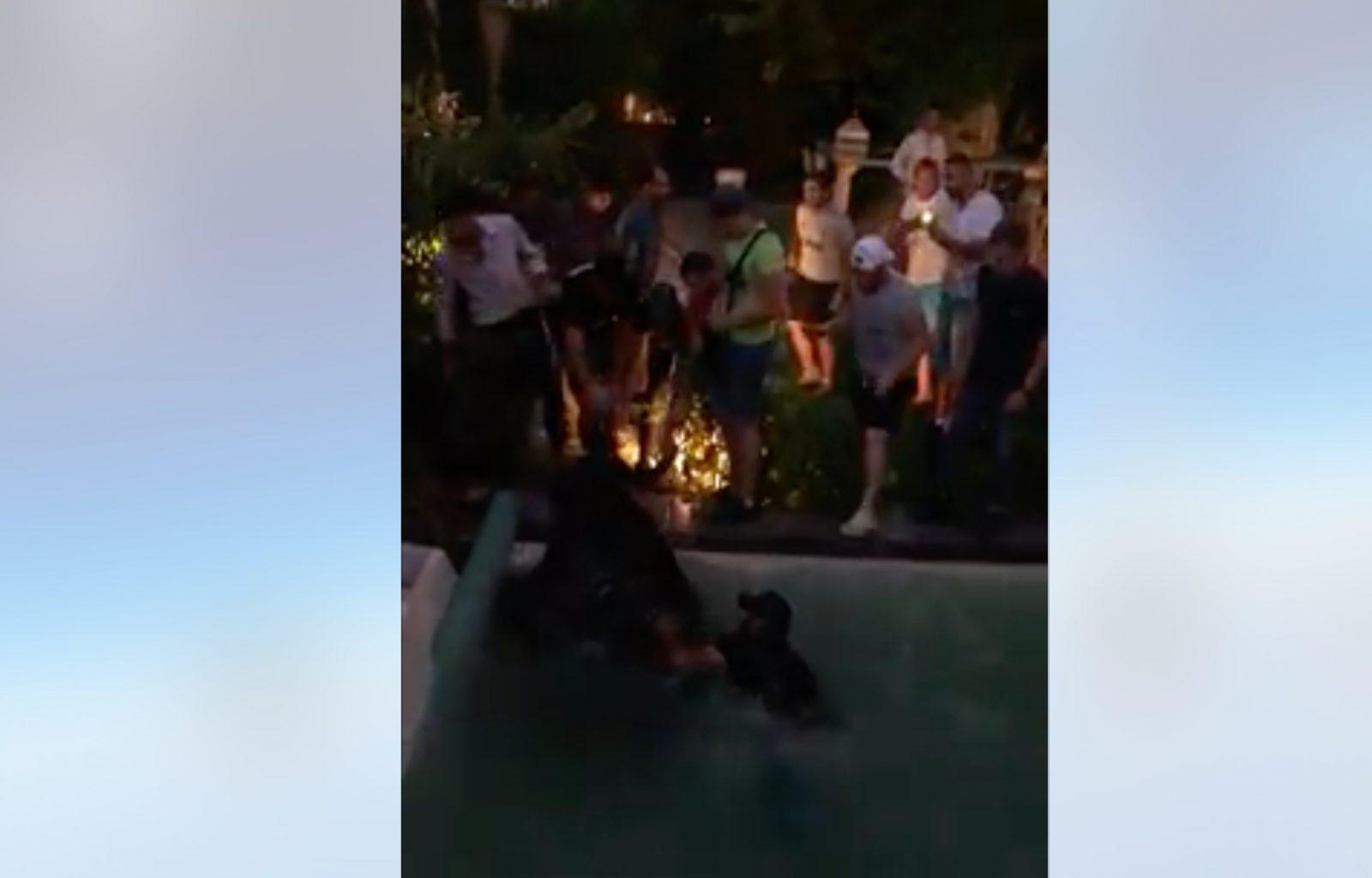 VIDEO // A Bernis, un taureau s'échappe et termine dans une piscine (19/07/2019)