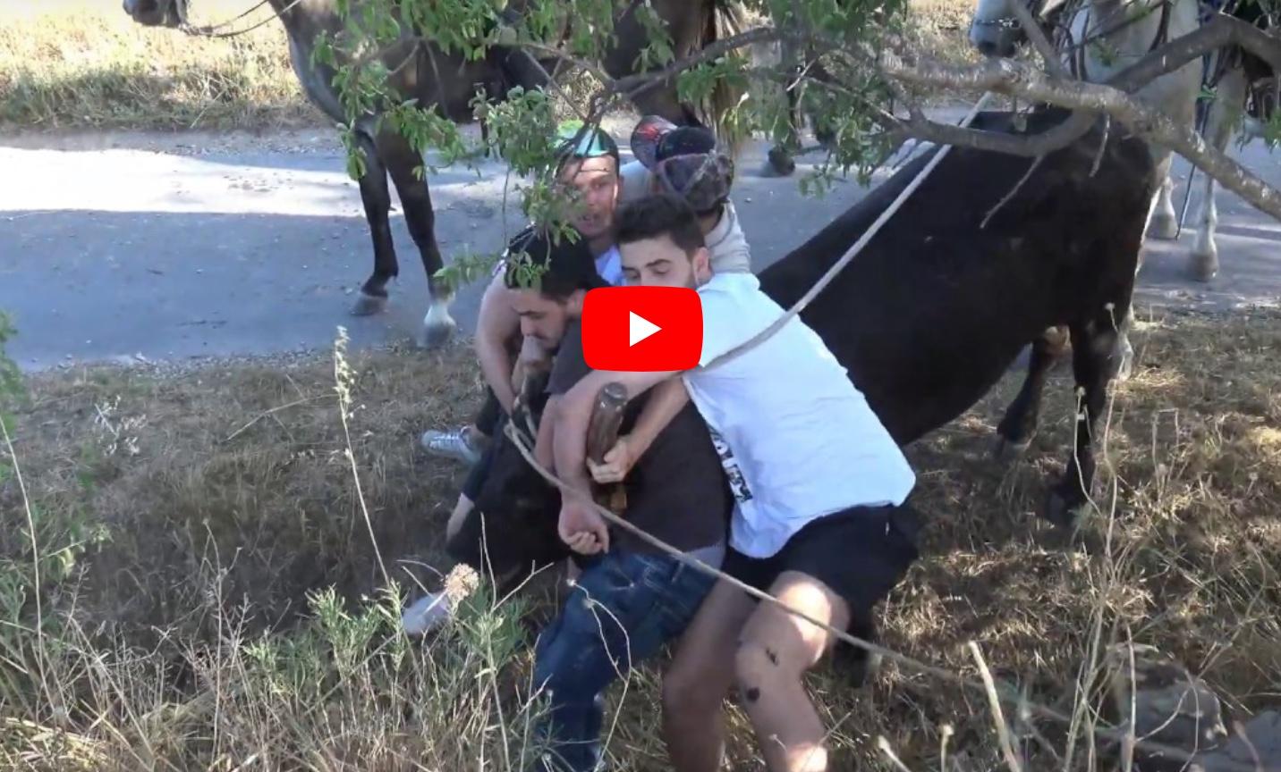 CAVEIRAC (14-07-2019) // Retour en vidéo sur l'abrivado longue, encierro et bandido parcours ouvert
