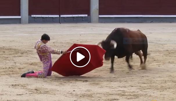 MADRID (11-08-2019) VIDEO // CARLOS OLSINA séduit, ARANDA coupe une oreille
