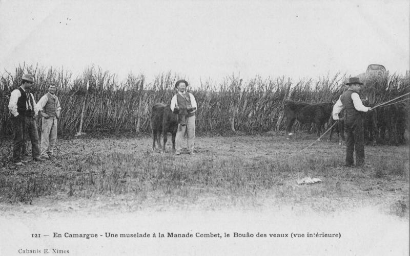 Manade Combet, les origines de la devise rouge et verte