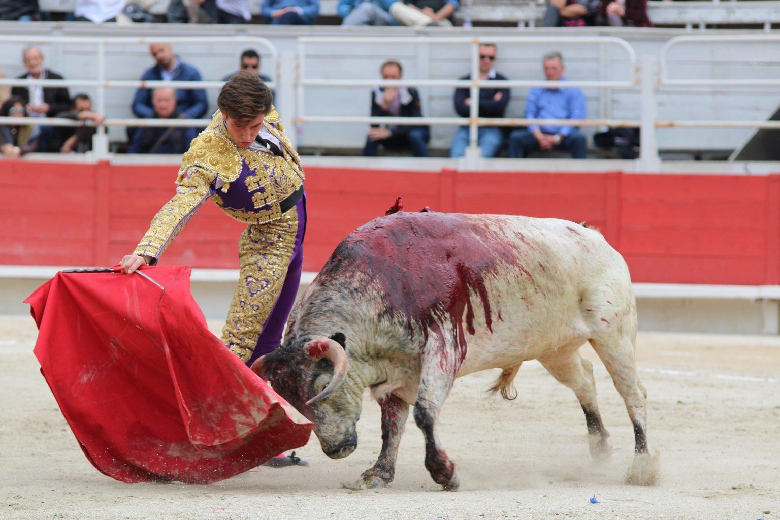 TIBO GARCIA, 67eme matador de toros français