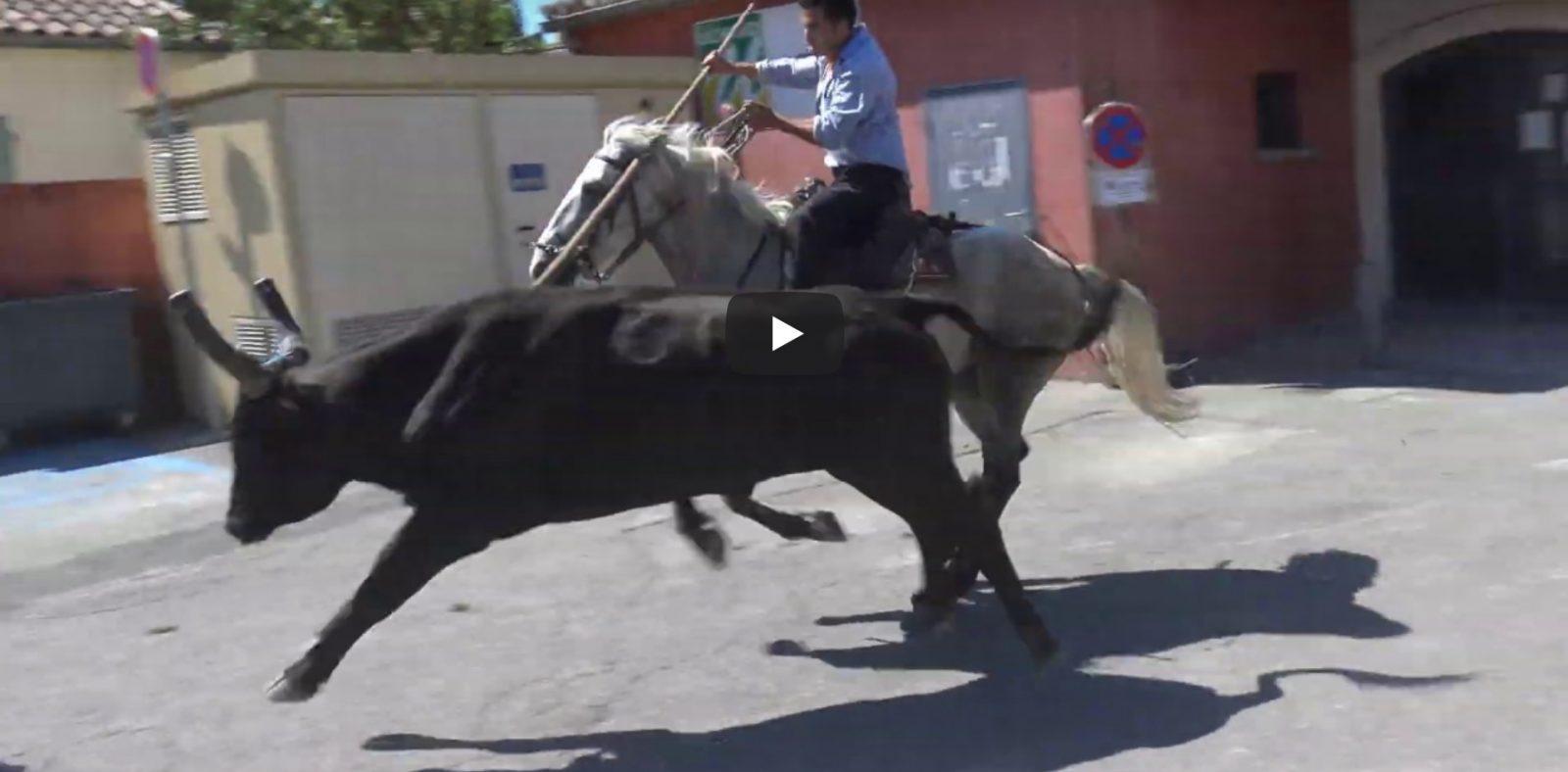 UCHAUD (16/08/2019) – Retour en vidéo sur le FESTIVAL D'ABRIVADO