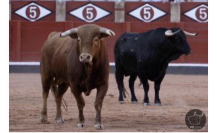 La traditionnelle desencajonada des toros de la Feria de Salamanca