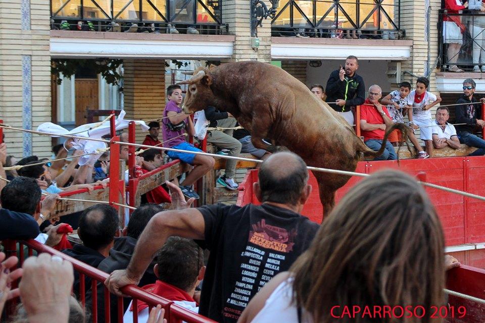 VIDEO // Un toro s'échappe des Arènes de Caparroso et termine dans le Rio Aragon