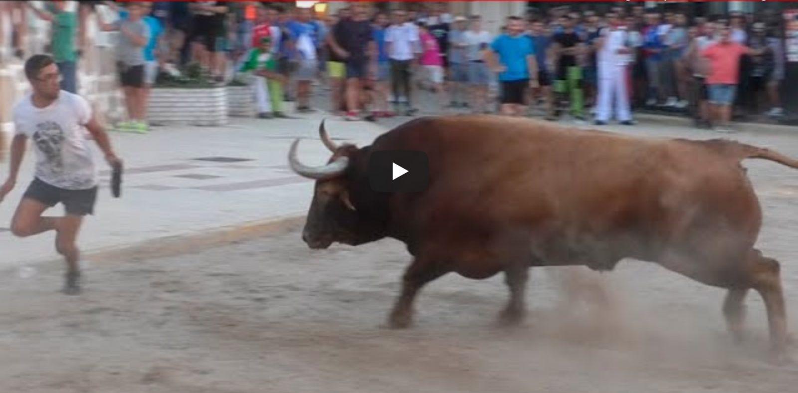 🌪 Suelta de toros en las fiestas patronales de ALMENARA