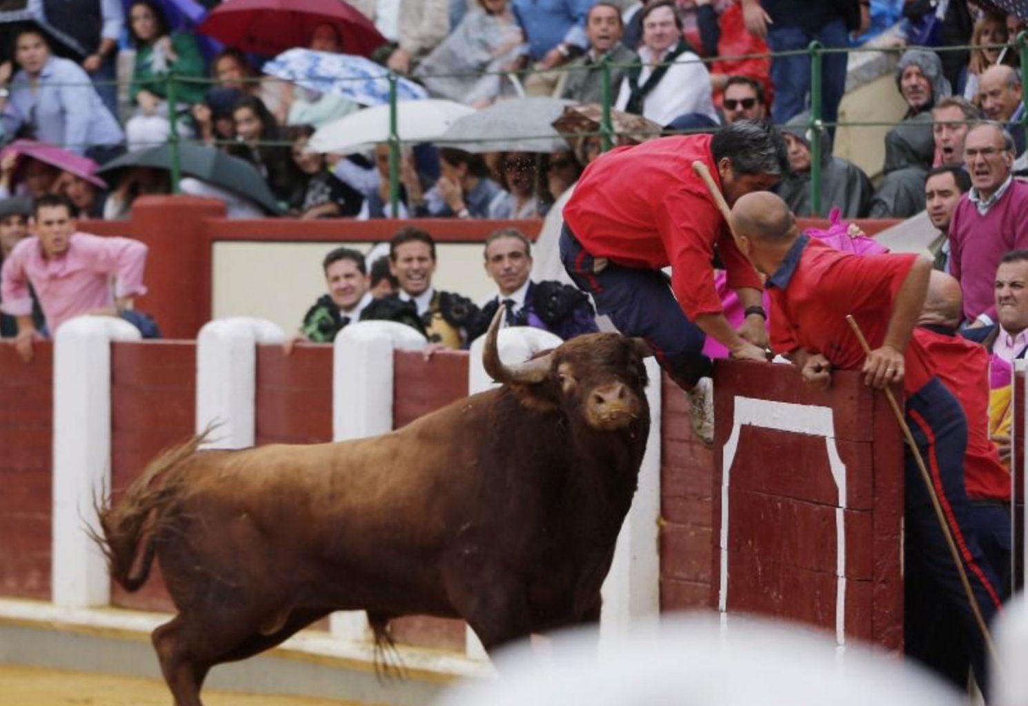 Un monosabio reçoit un coup de corne à Valladolid