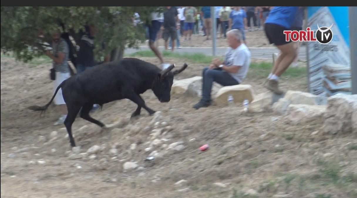 VIDEO // Le BESTOF des taureaux échappés 2019