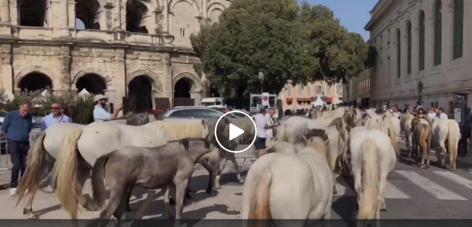 VIDEO // Retour sur la Féria des Vendanges 2019 à Nîmes – Bodegas, animations, rues, concerts…