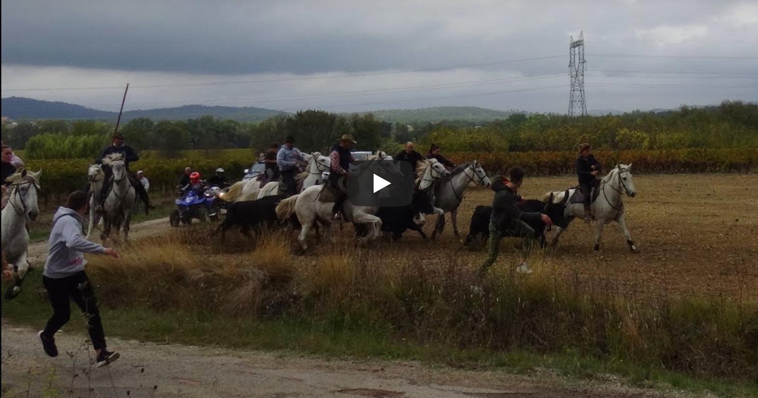 FONTANES (19/10/2019) – Retour en vidéo sur l'ABRIVADO LONGUE + BANDIDO