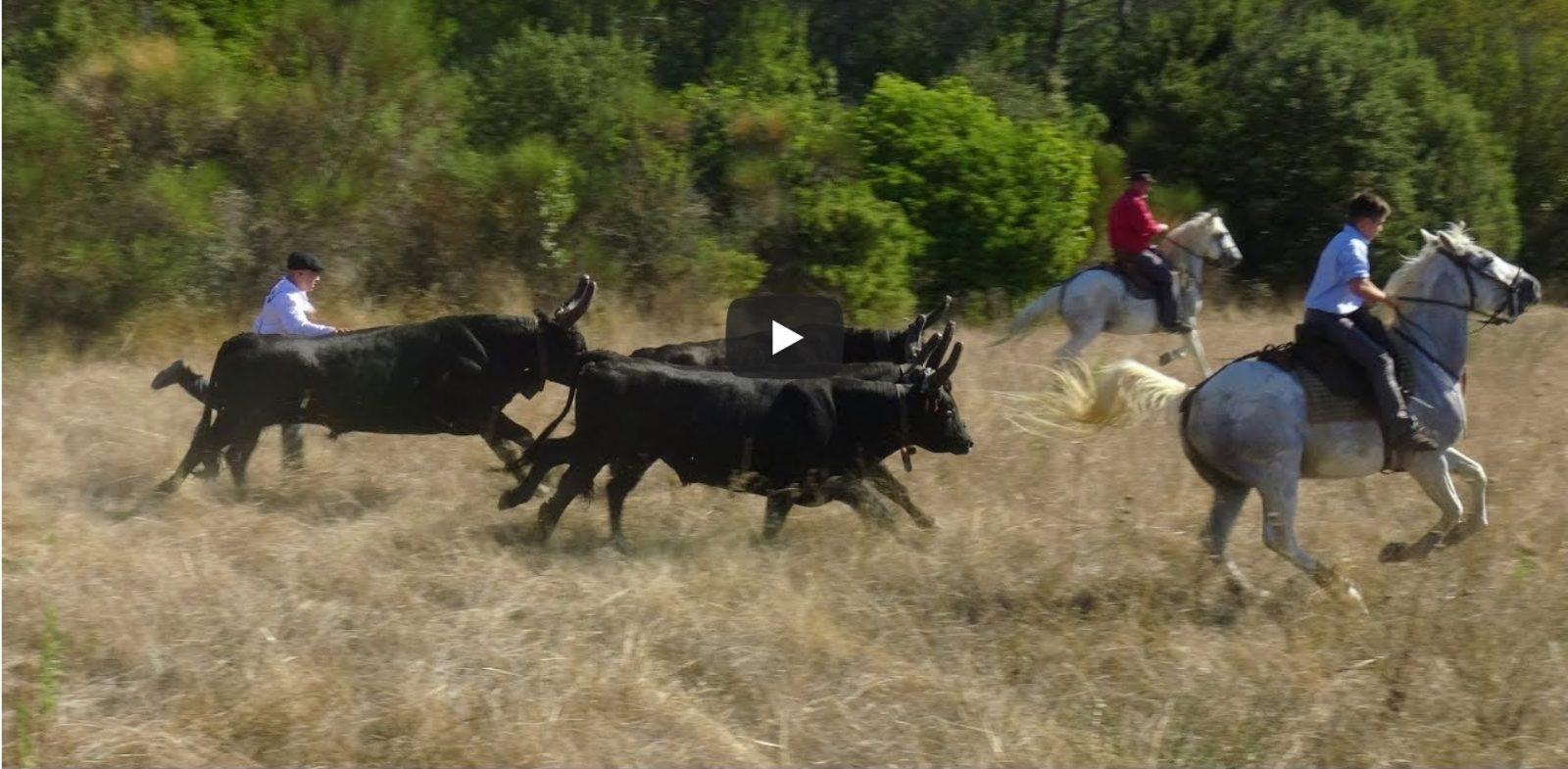 PARIGNARGUES (28/09/2019) – Retour en vidéo sur la journée taurine