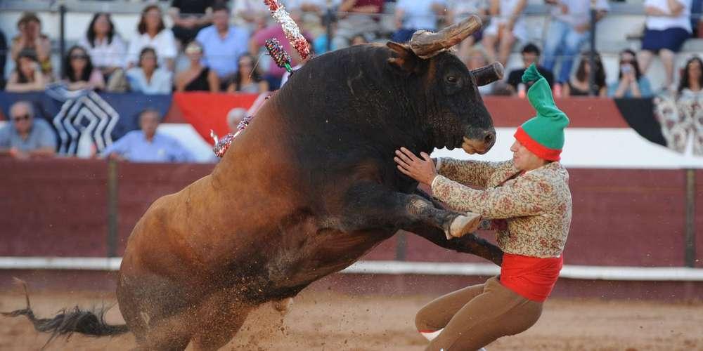Portugal, les toros comme liberté fondamentale.