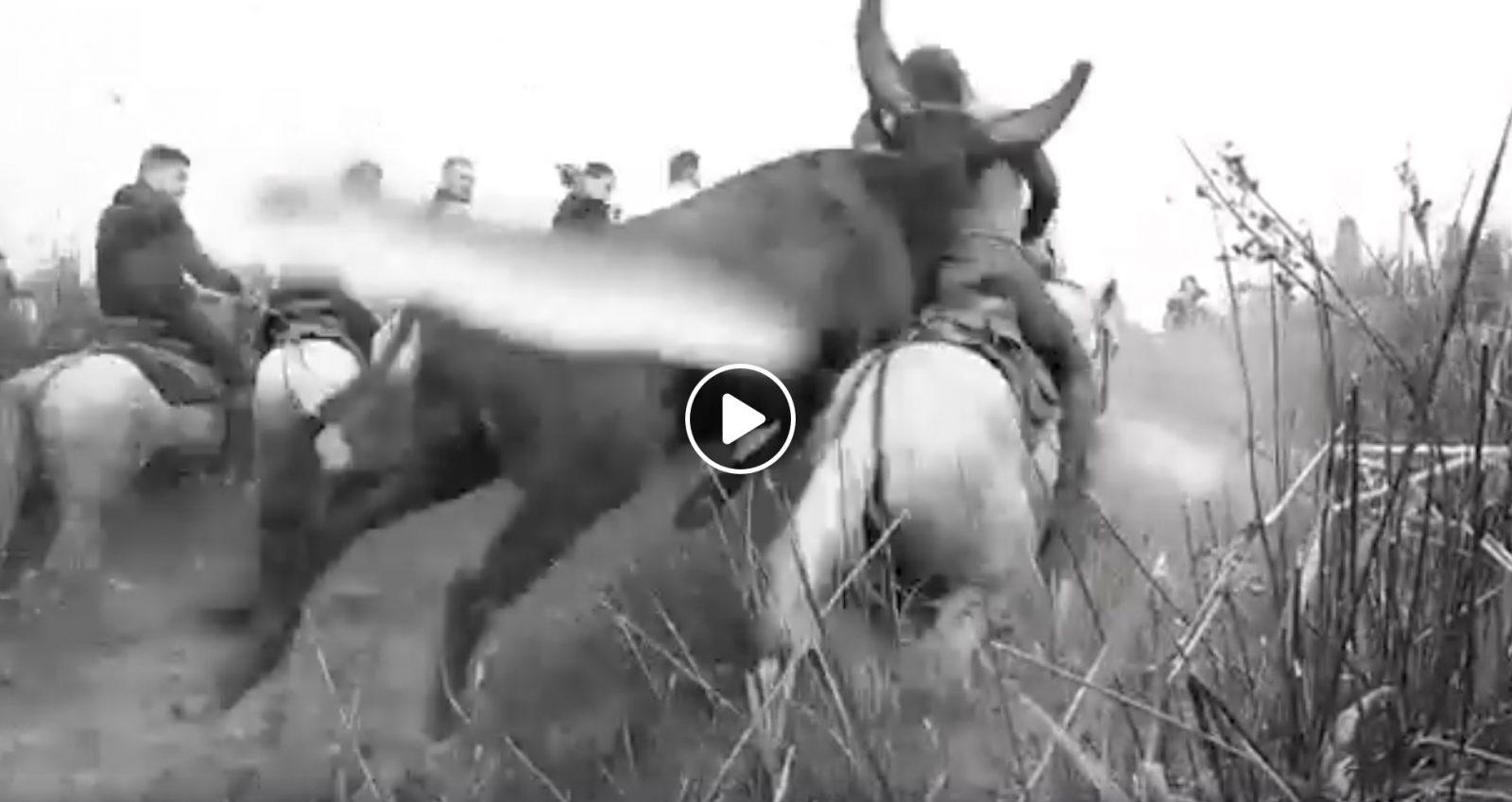 VIDEO DU NET // Le saut du taureau dans les près d'Aigues Mortes