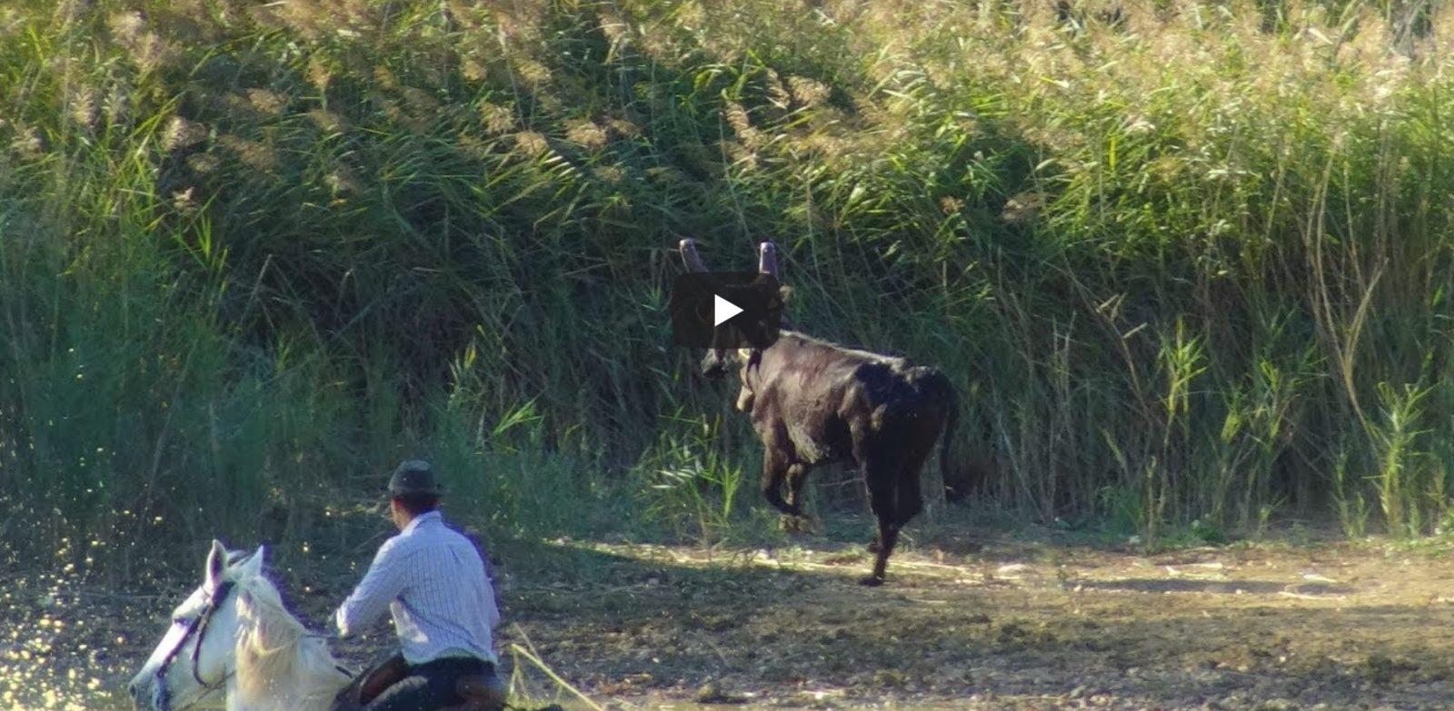 ST MAURICE DE CAZEVIEILLE(29/09/2019) – Retour en vidéo sur la gase