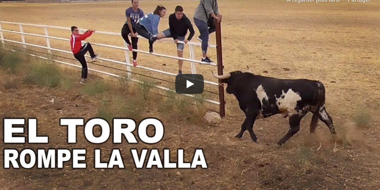 VIDEO DU NET // El Toro Rompe la Valla Castrillo de la Guareña 2019