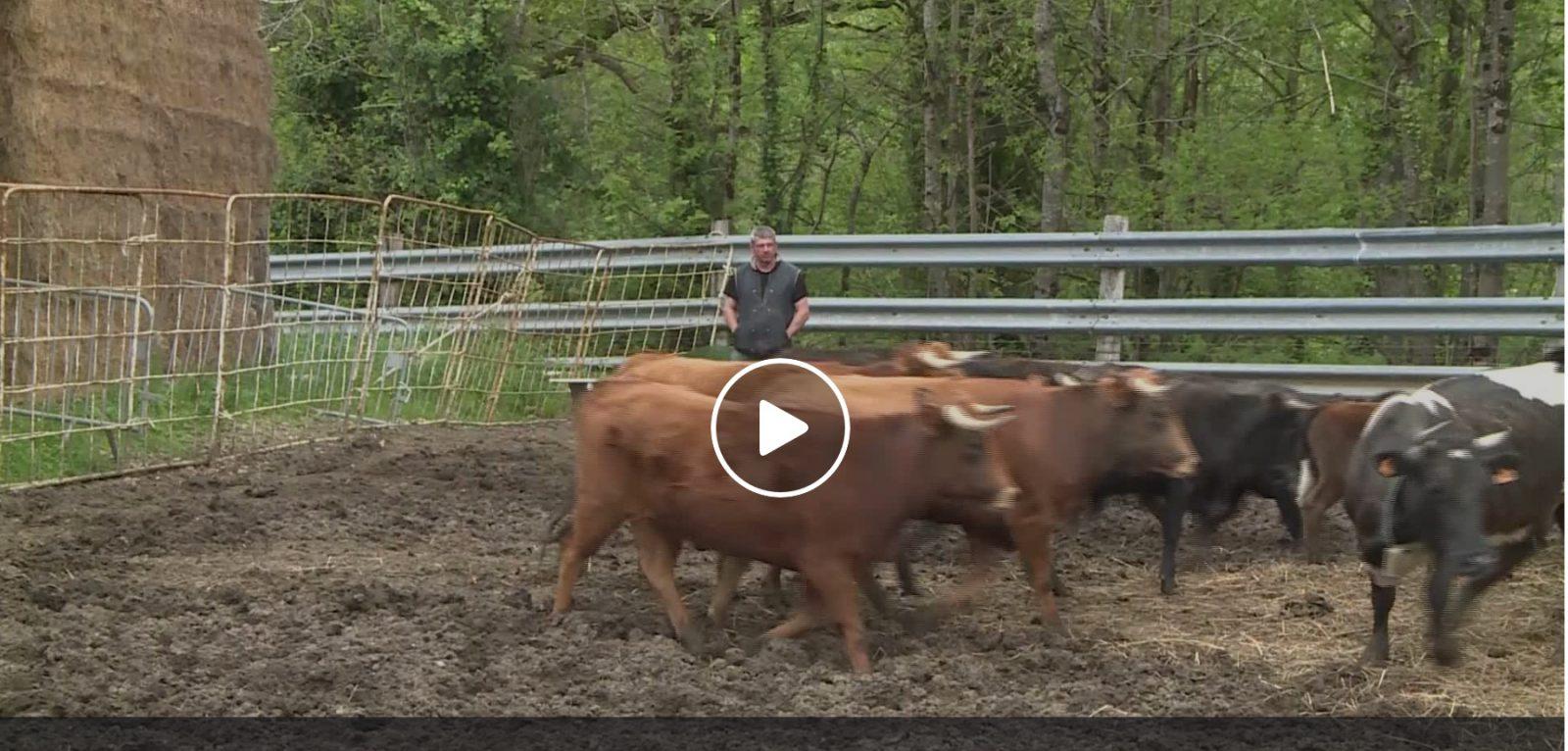 VIDEO // A la découverte de la ganaderia Aventura