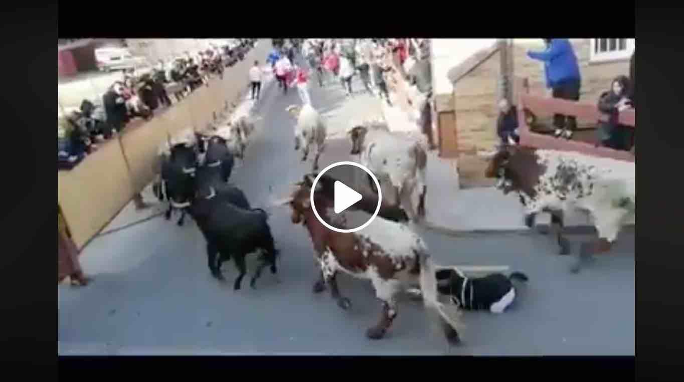 VIDEO // VALDEMORILLO – Encierros San Blas 2020