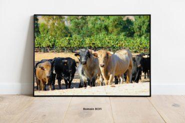 toro en el campo photo impression