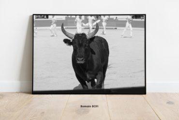 Photo impression taureau course camarguaise