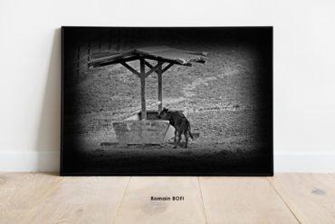 tableau toro agneau en el campo photo