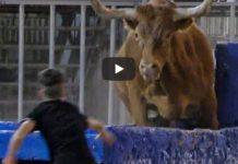 encierro toro espagnol