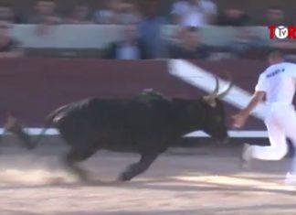 Banaru (Manade du Rhône) - Finale Avenir Istres 2013