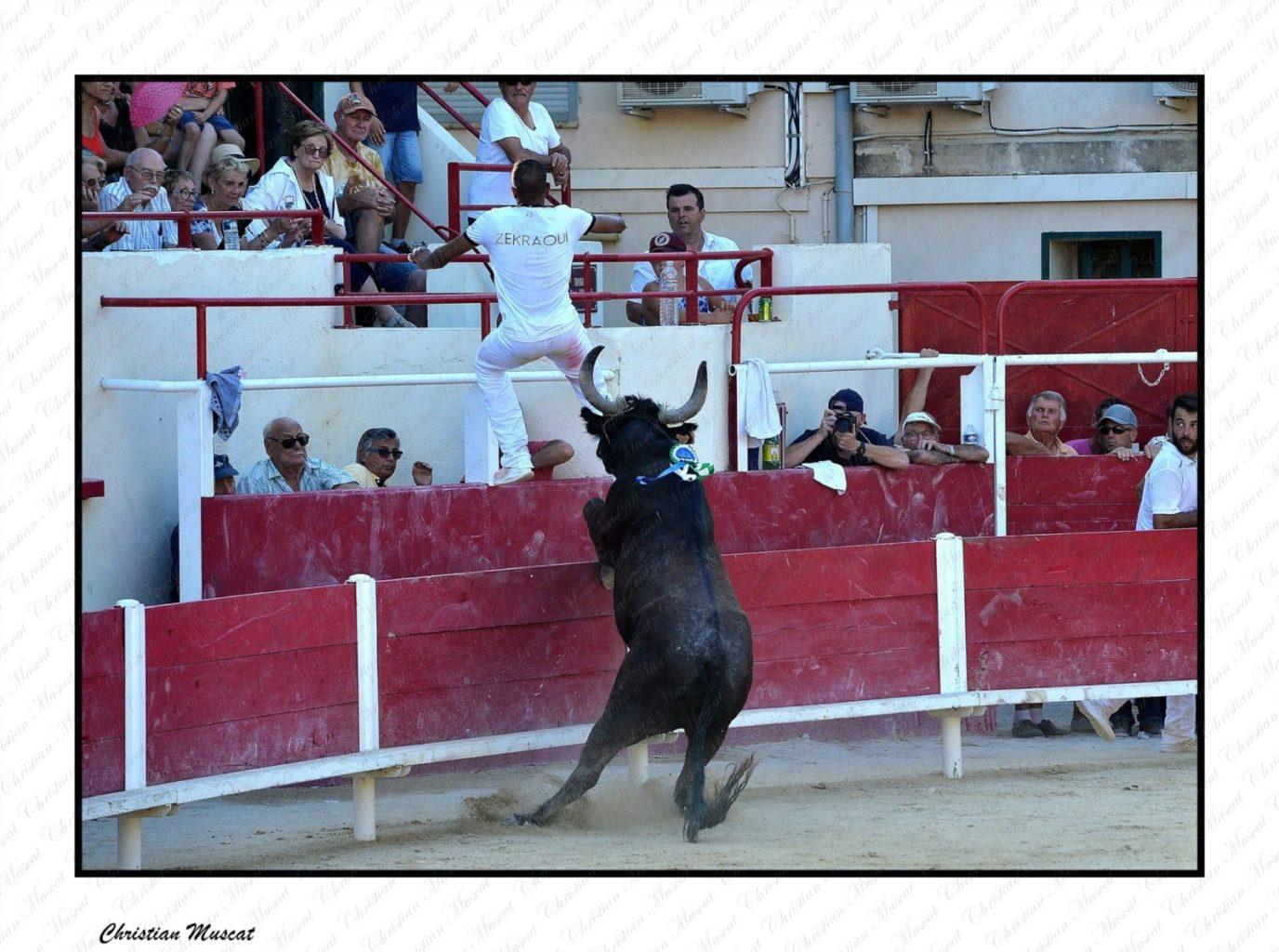 NIMOIS fierté de la manade Fabre Mailhan